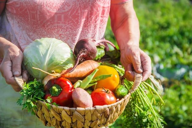 Avó no jardim recolher a colheita. foco seletivo.