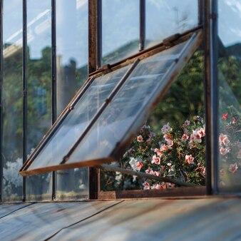 Azáleas brancas de florescência na estufa em uma janela levemente aberta, foco macio seletivo. plantas com flores crescendo no jardim botânico