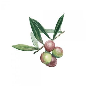 Azeitonas ramo com frutas e folhas