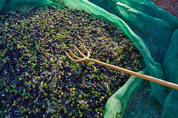 Azeitonas textura na colheita colheita líquido e garfo