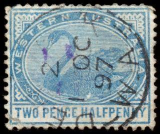 Azul cisne selo