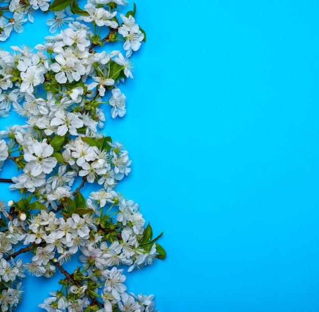 Azul, com, florescendo, branca, cereja, ramos