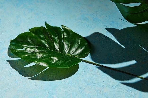 Azul com folha monstera e sombra dura do fundo monstera