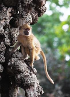 Babuíno na árvore na áfrica