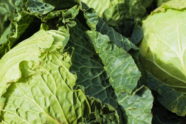 Backgound cabagge. conceito de dieta mediterrânica e vegan.