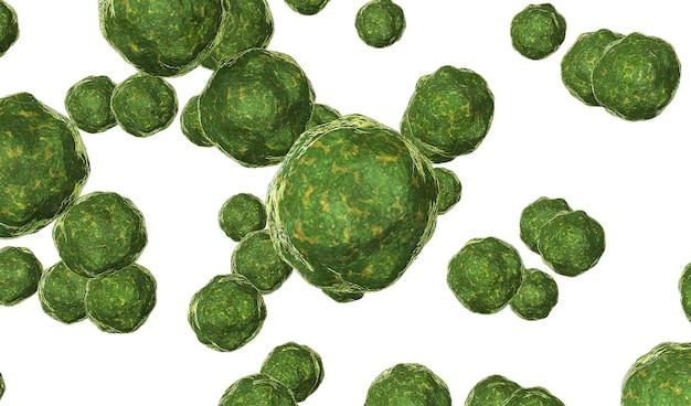 Bactéria vírus renderizado em verde isolado em branco renderização 3d