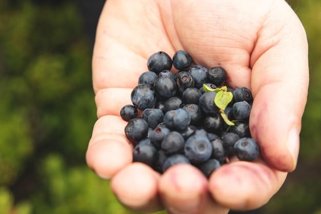 Baga saborosa e madura na palma da mão de um homem. colete frutos silvestres nas montanhas
