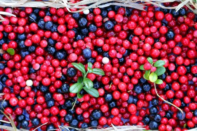 Bagas, cranberries e mirtilos. alimentos saudáveis e com vitaminas