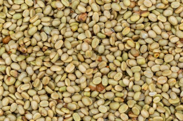Bagas de café arábica fresca