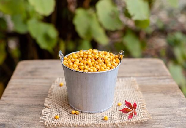 Bagas de espinheiro maduro orgânico em um balde. vitamina outono bagas