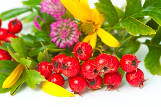 Bagas de espinheiro, trevo e flores