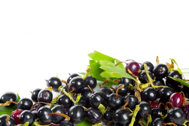 Bagas de groselha preta com folhas verdes. frutas frescas, isoladas