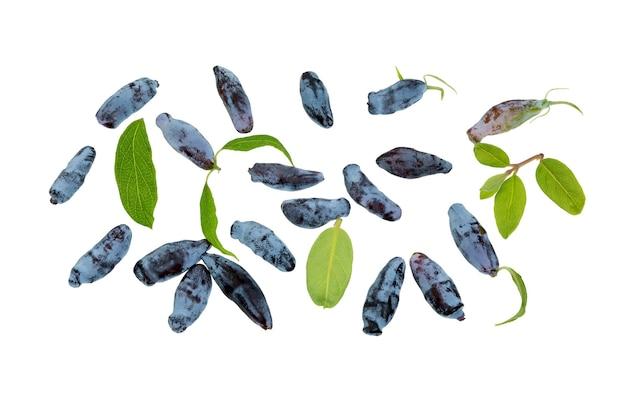Bagas de madressilva e folhas isoladas no fundo branco. bagas madressilvas azuis (lonicera caerulia), baga de madeira.