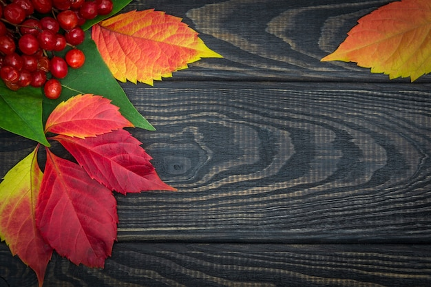 Bagas vermelhas de viburnum e folhas de outono em quadros pretos