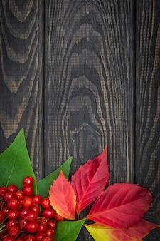 Bagas vermelhas de viburnum e folhas de outono
