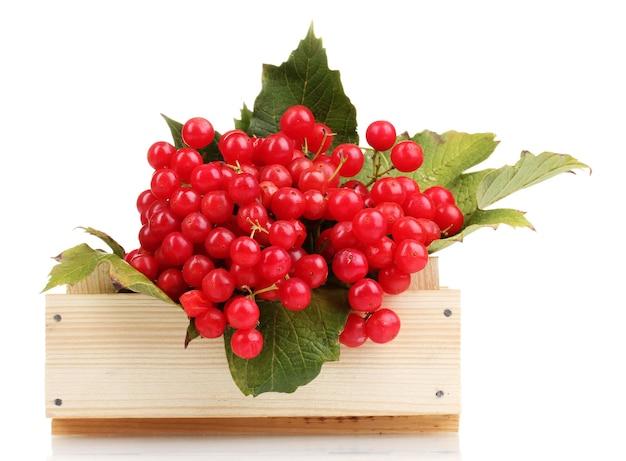 Bagas vermelhas de viburnum em caixa de madeira isoladas em branco