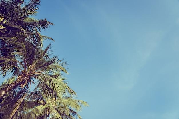 Baixo ângulo, bonito, coqueiro, com, céu azul, fundo