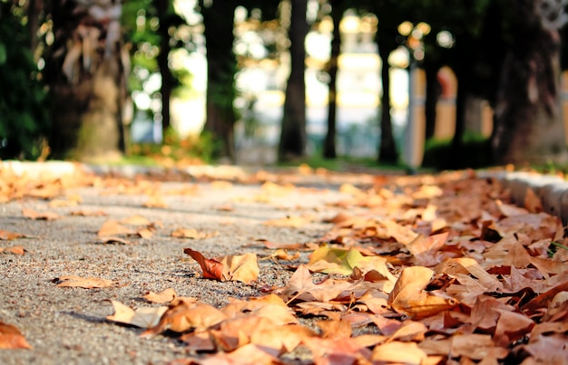 Baixo ângulo da perspectiva do caminho de um parque em uma cidade com muitas folhas caídas.