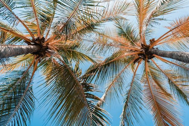 Baixo, ângulo, tiro, de, bonito, coqueiro, palma, ligado, céu azul