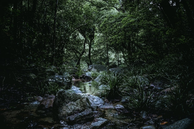 Baixo, ângulo, tiro, pequeno, rio, cheio, pedras, meio, floresta