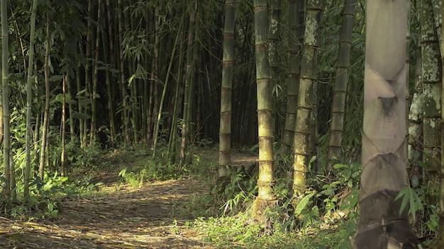 Bakground de bambu