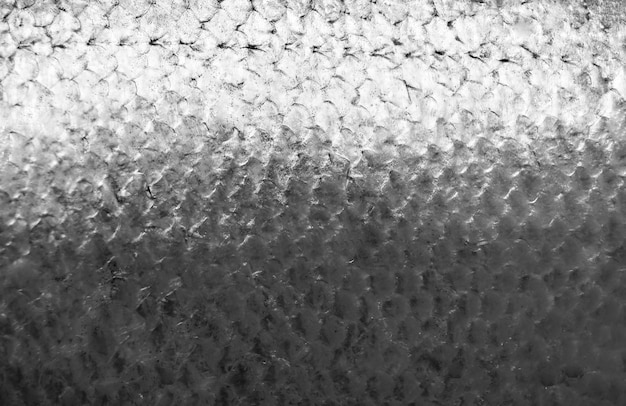 Balanças de peixe salmão
