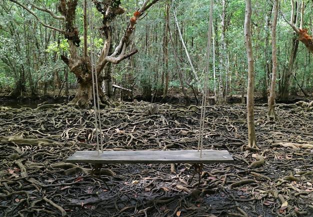 Balanço de madeira na floresta de mangue com raízes de árvore incrível, tailândia