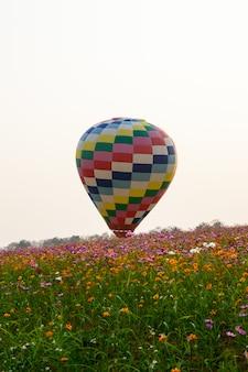 Balão flutuando no meio do campo de flor do cosmos