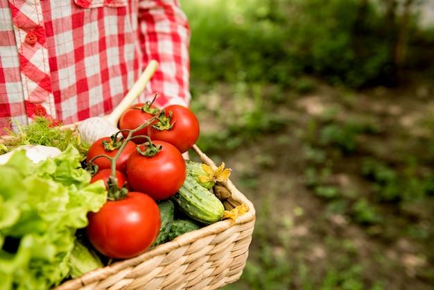 Balde com tomates e pepinos