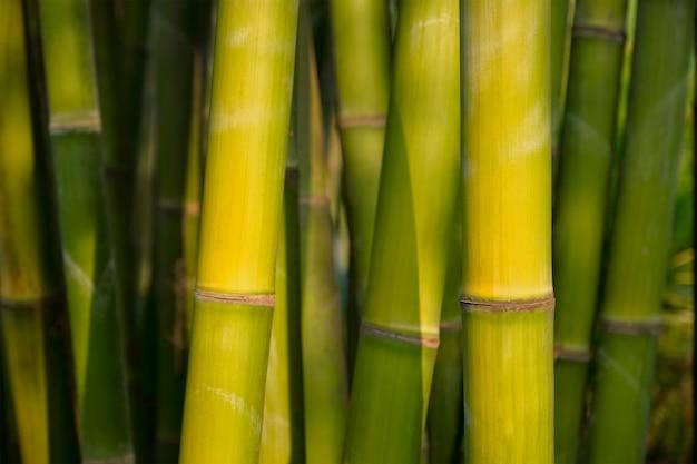 Bambu perto no bosque de bambu