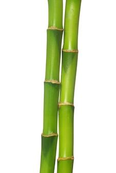 Bambu verde isolado em um fundo branco