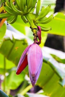 Banana flor e cacho na palma da mão