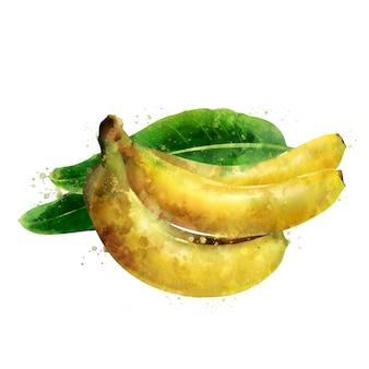 Banana. ilustração em aquarela
