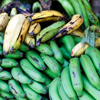 Bananas verdes e amarelas na república dominicana