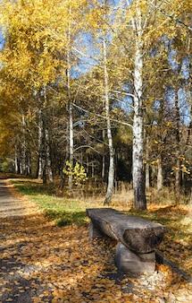 Banco de madeira ao longo do caminho coberto de folhas amarelas no parque dourado da cidade de outono.