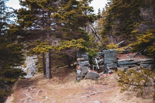 Banco de madeira cinza perto de árvores verdes durante o dia