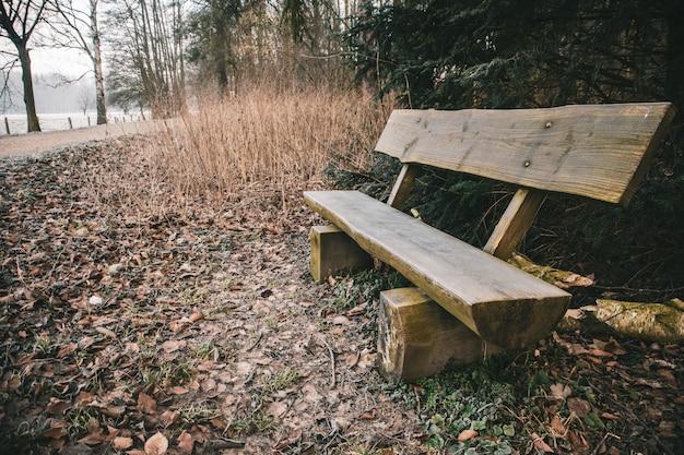 Banco de madeira em um parque cercado por vegetação com um lago ao fundo durante o outono
