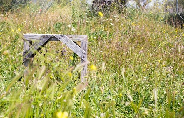 Banco de madeira entre a vegetação selvagem