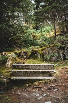 Banco de madeira marrom em campo de grama verde