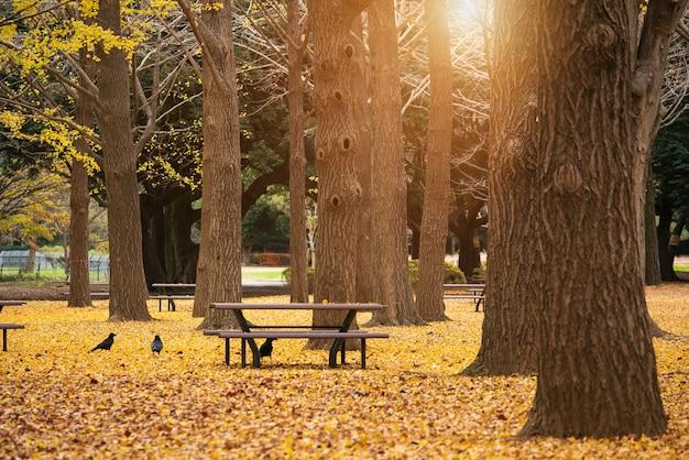 Banco e pássaros no parque outono. paisagem de outono.