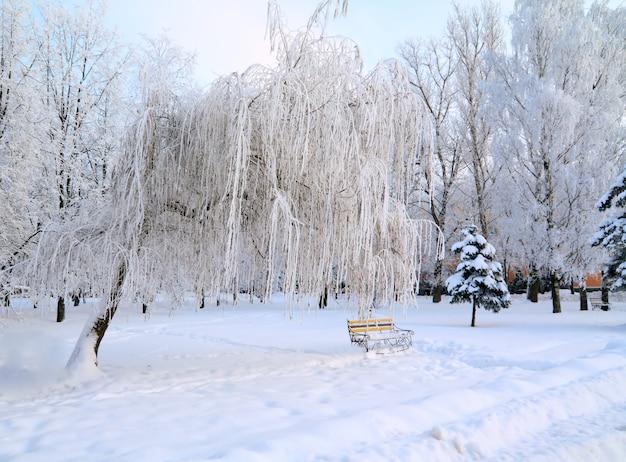 Banco em winter park