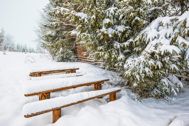 Bancos cobertos de neve ficam em altos montes de neve perto de majestosos abetos cobertos de neve em um dia gelado de inverno