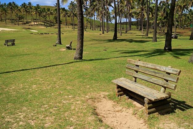 Bancos de madeira rústicos na luz do sol na praia de anakena, ilha de páscoa, chile
