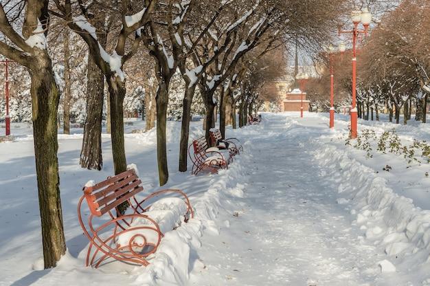 Bancos em parque ensolarado de inverno
