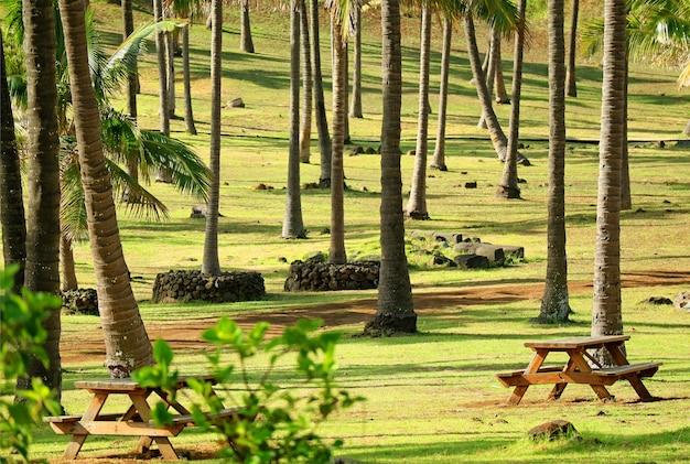 Bancos madeira, entre, coqueiros, parque praia, ilha páscoa, chile, américa sul