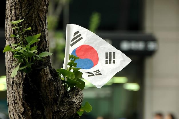 Bandeira coreana em uma árvore