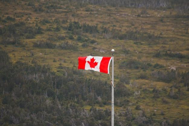 Bandeira do canadá com fundo de floresta