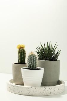 Bandeja de mármore com plantas suculentas na parede branca. plantas de casa