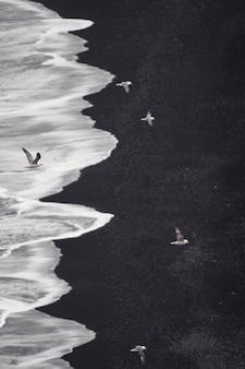 Bando de andorinhas do ártico voando sobre dyrhólaey, costa sul da islândia
