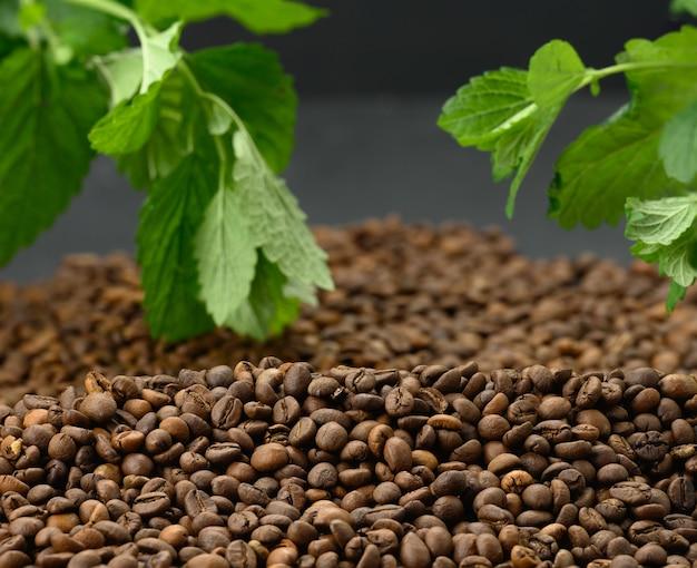Bando de arábica torrado marrom e grãos de café robusta, atrás de um raminho de hortelã com folhas verdes. superfície para designer